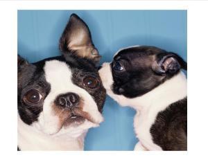 dogs gossiping