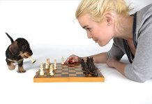 FRIENDSHIP little dog playing chess