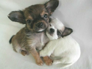 FRIENDSHIP tiny dogs hugging