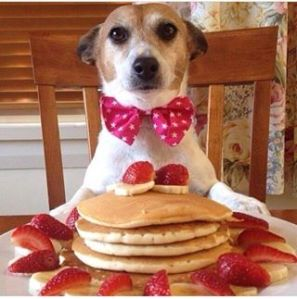 dog and pancakes
